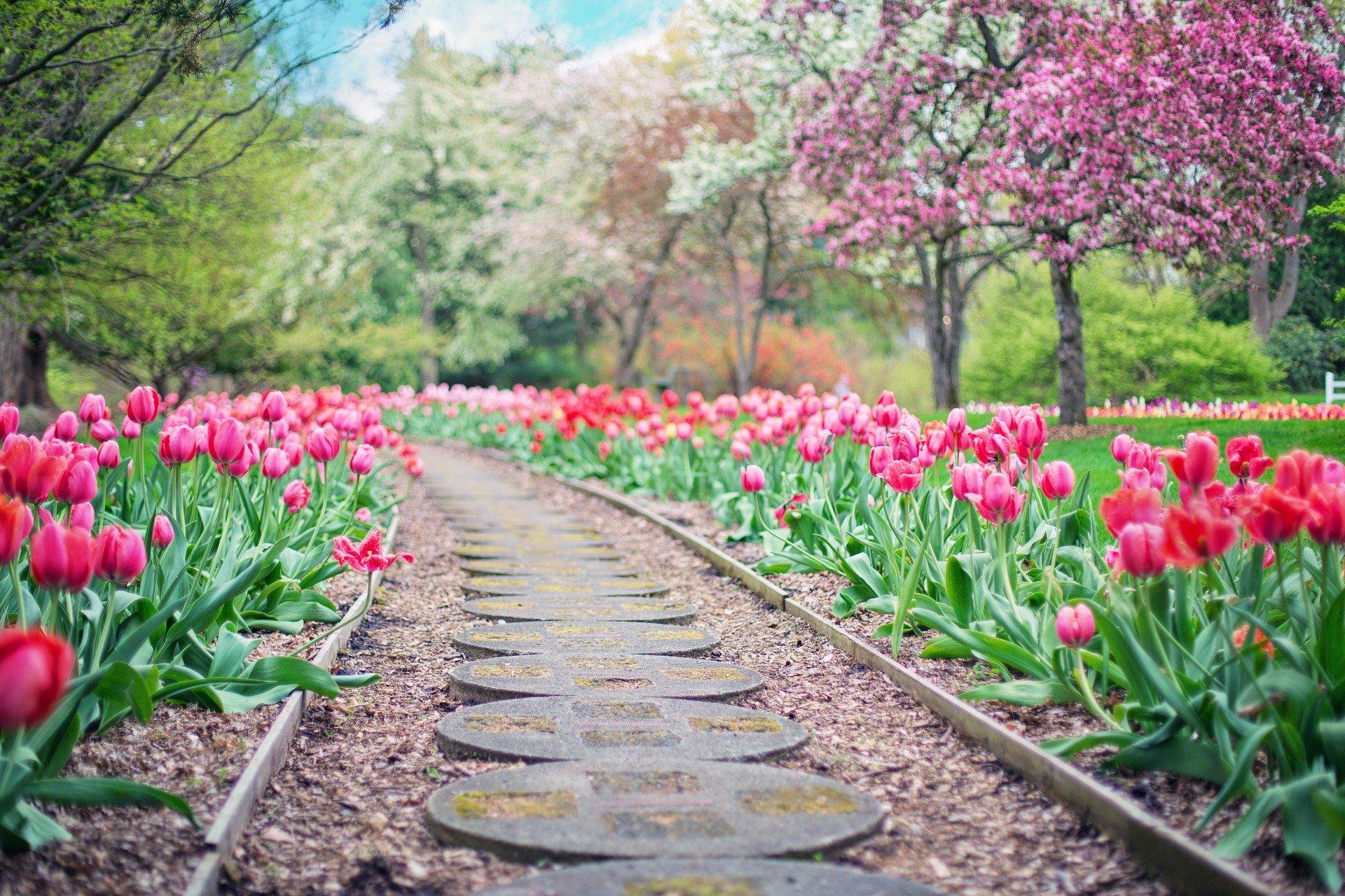 Alarmas para jardín: el complemento de seguridad para tu casa